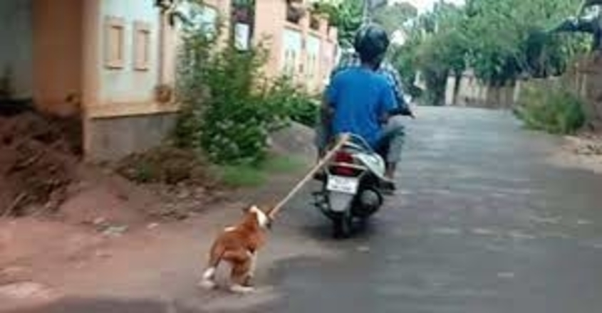 pet-dog-crime-owner-arrest-malappuram-edakara