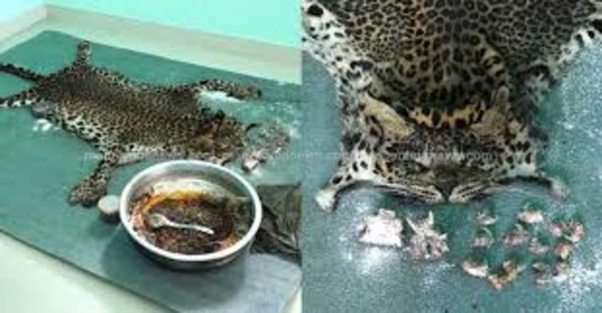 5-arrested-for-leopard-hunting-in-kerala